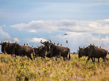 Great Migration Live Update – 29 April 2019