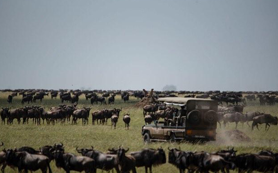 serengeti-wildebeest-migration-safari-vehicle
