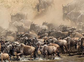 bucket-list-east-africa-safari-wildebeest-migration