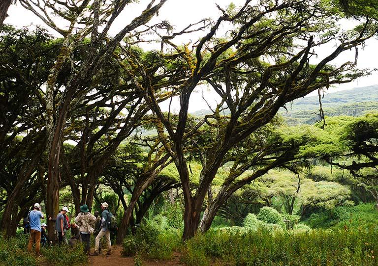 Ngorongoro-tanzania-walking-safari-asilia-adventures