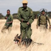 anti poaching canines with rangers in ol pejeta conservancy