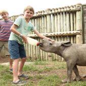 junior-ranger-program-at-Ol-Pejeta-Conservancy-feeding-rhino