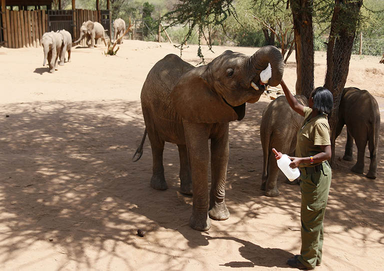 sera-explored-into-the-northern-frontier-reteti-elephant-sanctuary-