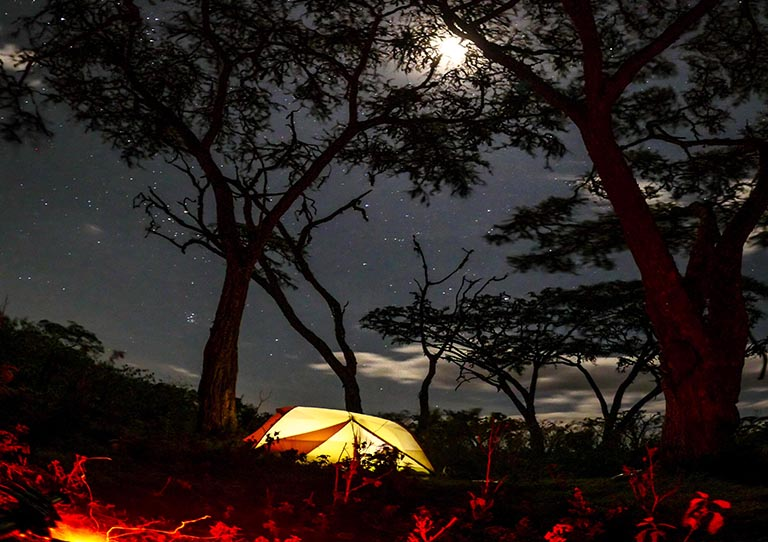 wayo-walking-fly-camp-at-night