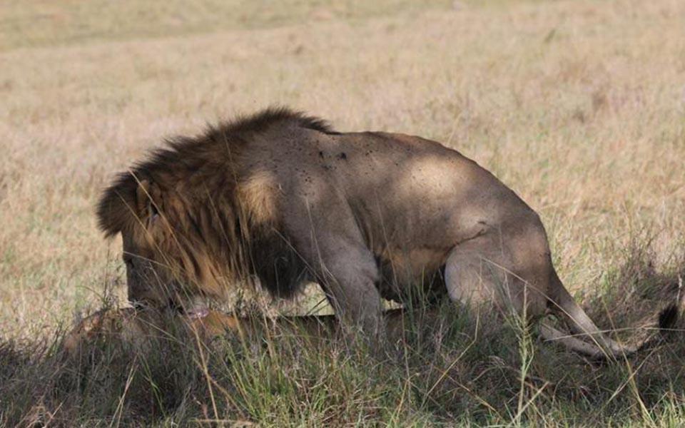 big-cat-safari-kenya-safari