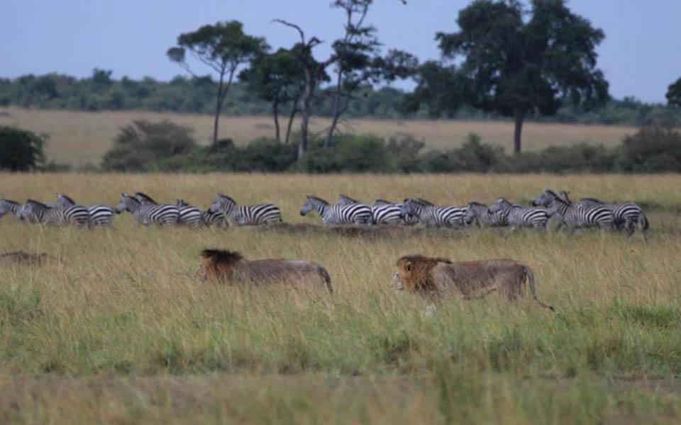 guided-kenya-safari