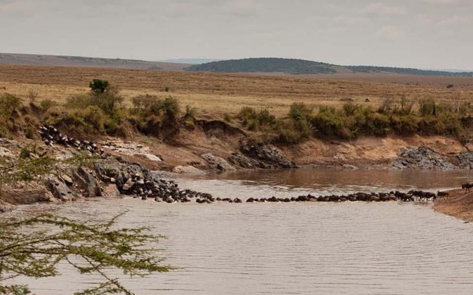 migration-river-crossing-mara-wildebeest
