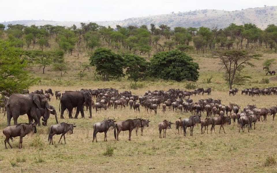 serengeti-migration-in-may