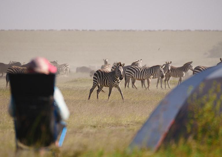 wayo-walking-fly-camp-zebras-asilia-adventures