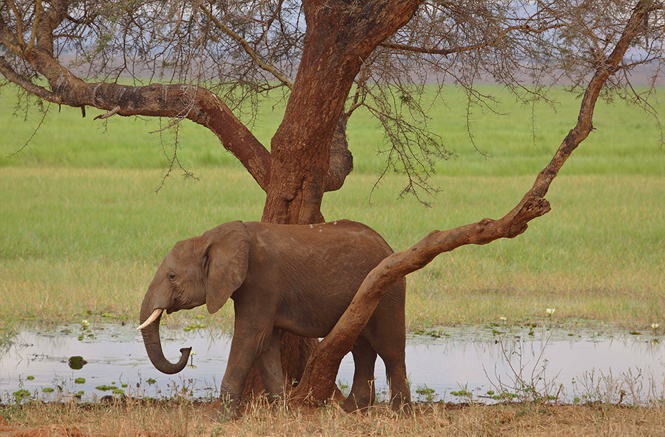 The elephants of Tarangire can always be found hanging around the marshy areas.