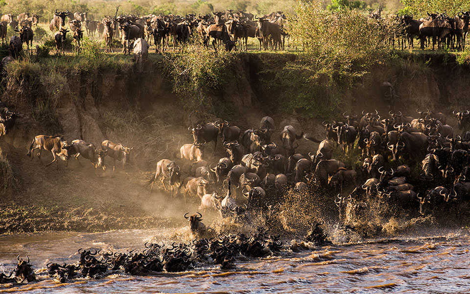 The epic struggle and drama of The Great Migration. BBC One -Serengeti Series