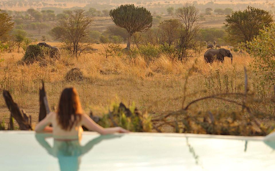 BBC One - Serengeti Series