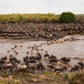 Great Migration Live Update – 01 July 2019