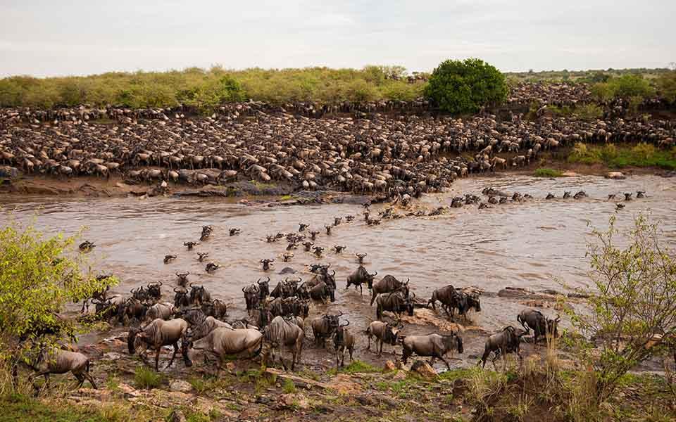 great migration river crossing mara north
