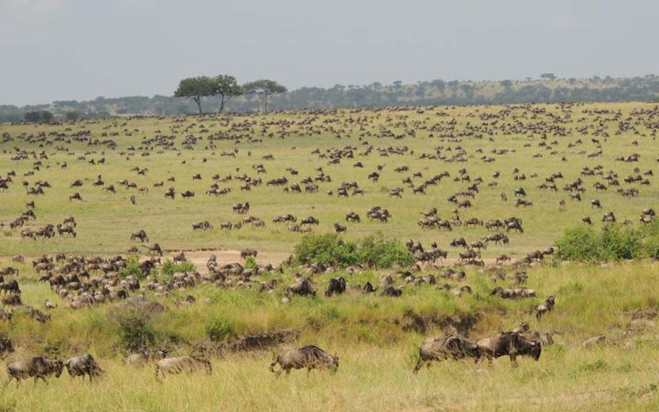 migration-update-july-marks-the-start-of-mara-river-crossing-in-the-serengeti