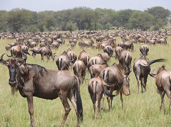 Great Migration Live Update – 22 July 2019