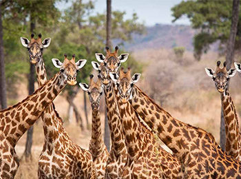 Four Great Locations For A Family Reunion Safari In East Africa