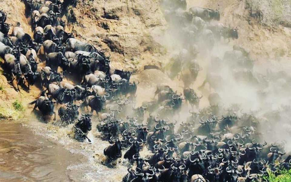 governors_camp_river_crossing_east_africa_herdtracker_migration
