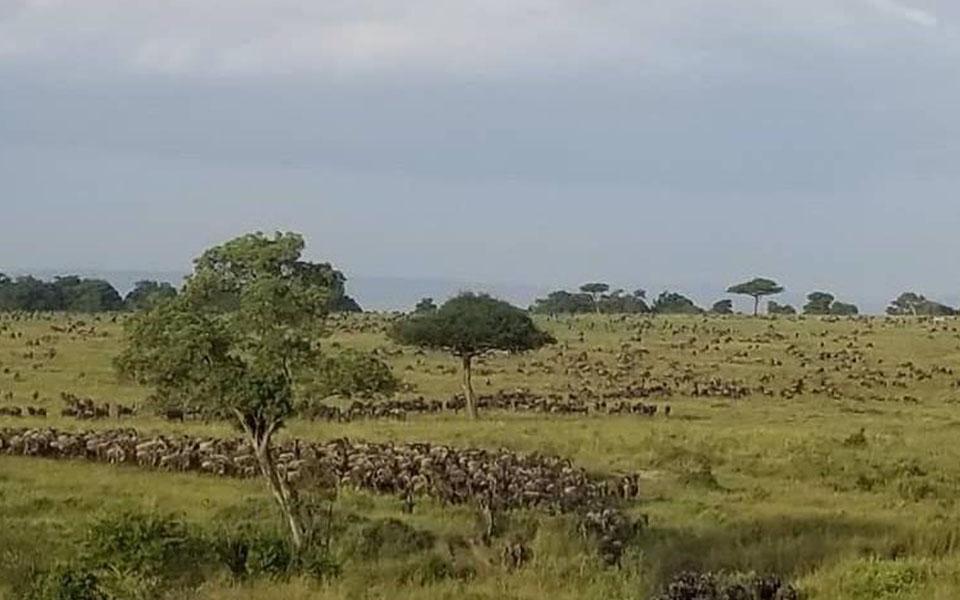 serengeti-wildebeest-migration-safari-tanzania