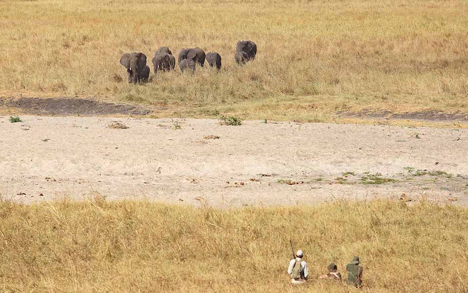 asili-asfrica-walking-safari-tarangire-national-park-tanzania-east-africa-travel