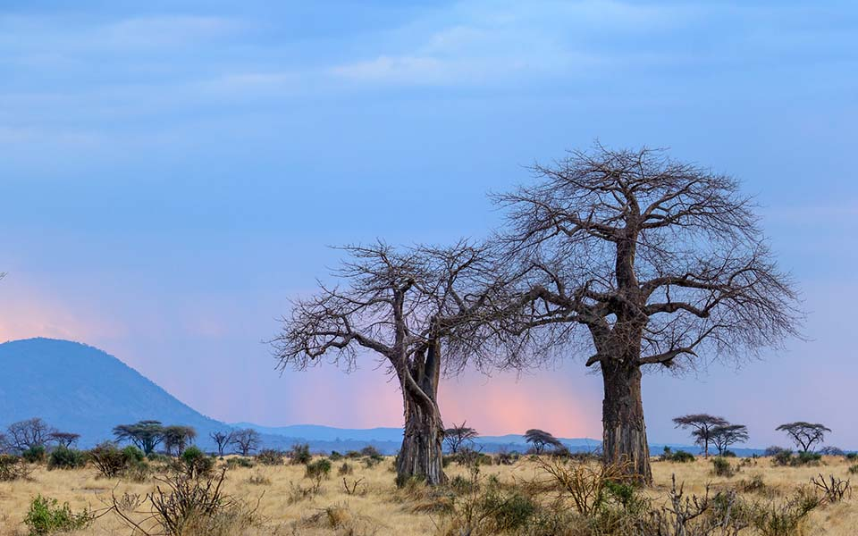 ruaha-national-park-asilia-africa-safari-travel-wildlife-landscape-sunset