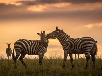 BBC One: Serengeti – The Zebra