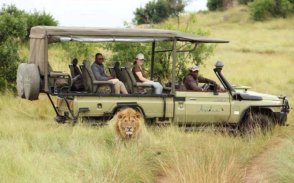 male-lion-spotted-on-game-drive-sayari-camp-asilia-africa-safari-responsible-tourism-awards-tanzania