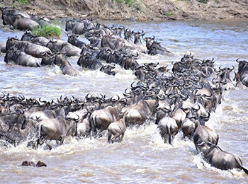 Great Migration Live Update – 05 August 2019