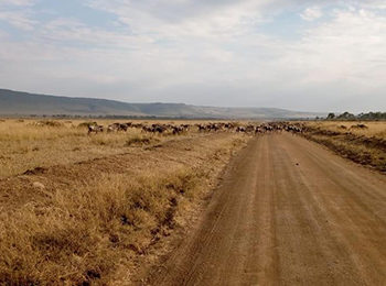 Great Migration Live Update – 19 August 2019