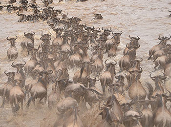 Great Migration Live Update – 16 September 2019