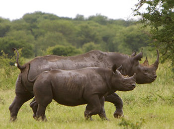 Rare Rhinos: Best Places To See Rhinos In East Africa