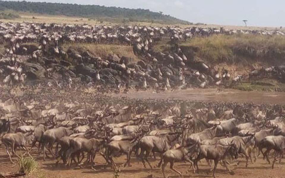 africa-mara-river-crossing