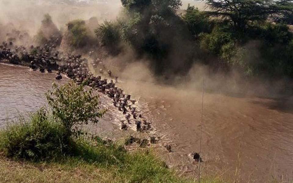 kenya-mara-river-crossings