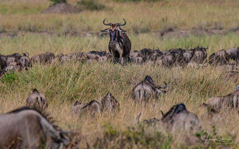 serengeti-great-wildebeest-migration