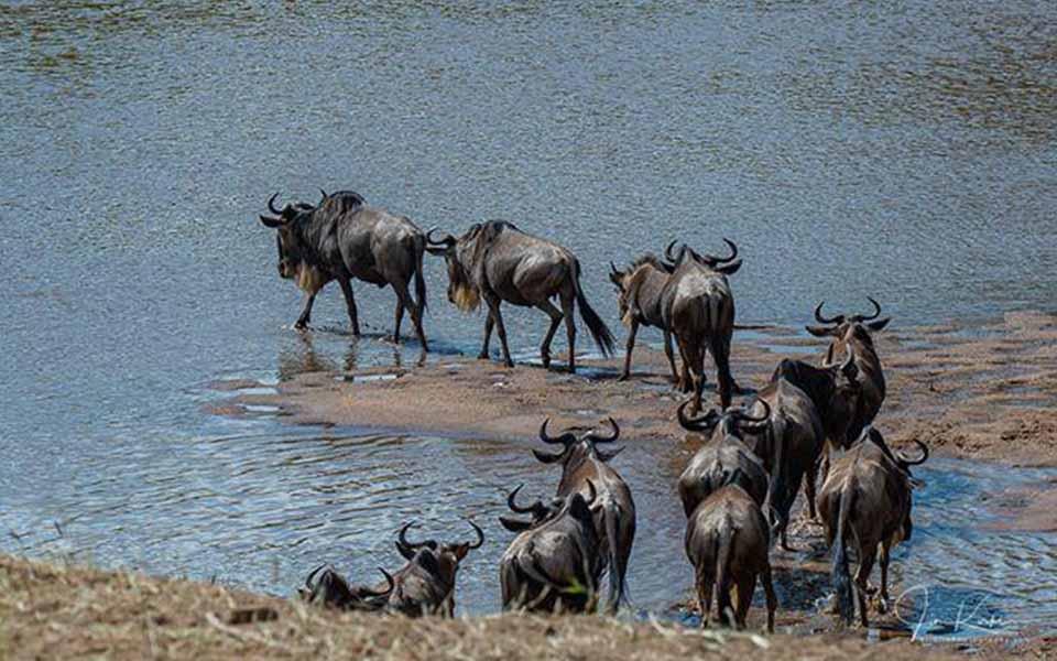 serengeti-mara-river-crossing