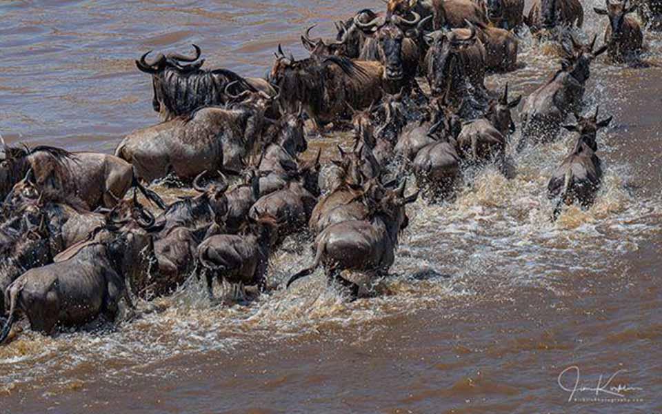 serengeti-river-crossing