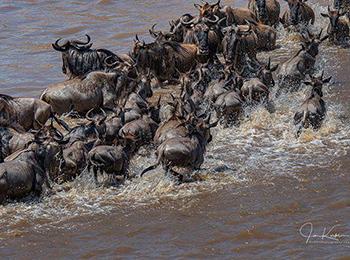 serengeti-wildebeest-migration-river-crossings