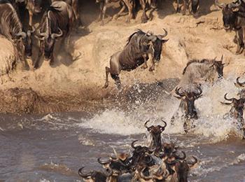 wildebeest-river-crossing_tanzania-east-africa