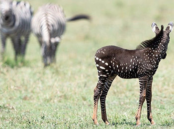 The Unique and Unusual: East African Safari Animals That Are Out of The Ordinary