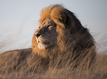 Guest Gallery: The Serengeti At Its Best