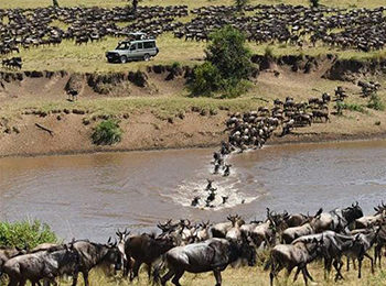 Everything You Need to Know About The Great Wildebeest Migration
