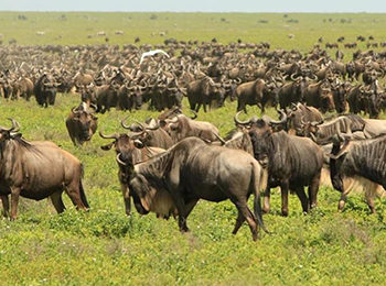 Great Migration Live Update – 16 March 2020