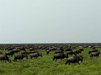 Great Migration Live Update – 20 January 2020