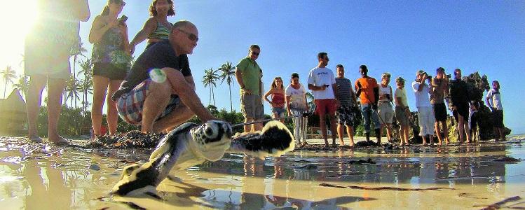 Matemwe Turtle Conservation Project Header