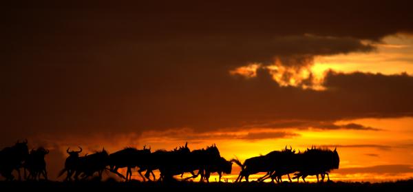 Roelof Schutte African Wildlife Photographer
