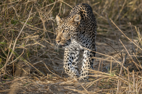 Pietro Luraschi African Wildlife Photographer