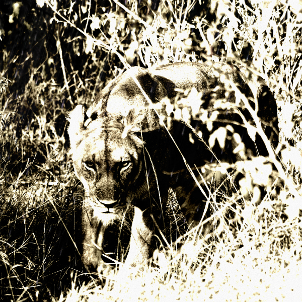Markus coerlin African Wildlife Photographer