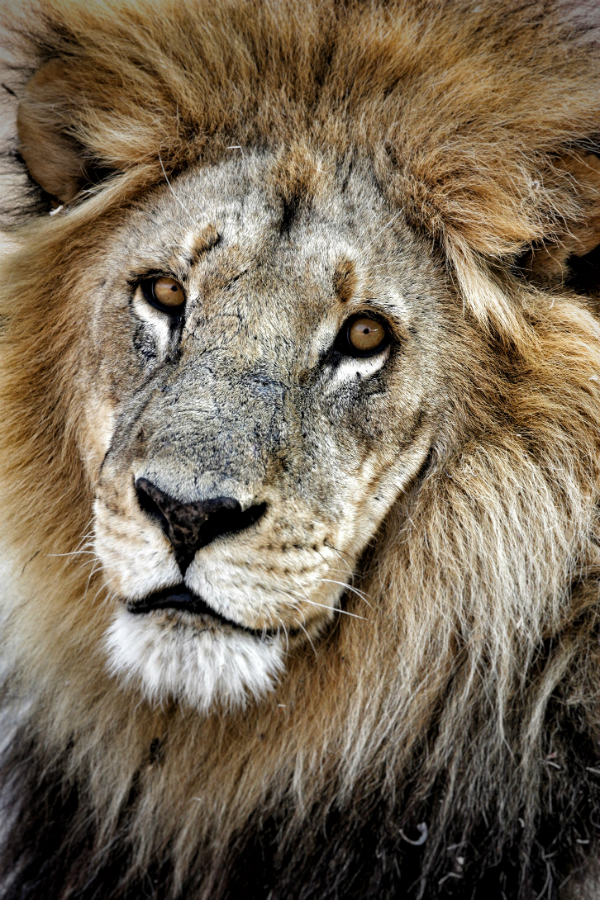 Tony Reumerman African Wildlife Photographer