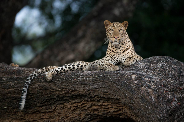 Edward Selfe African Wildlife Photographer