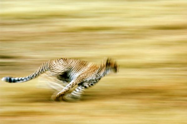 Paul Joynson-hicks African Wildlife Photographer